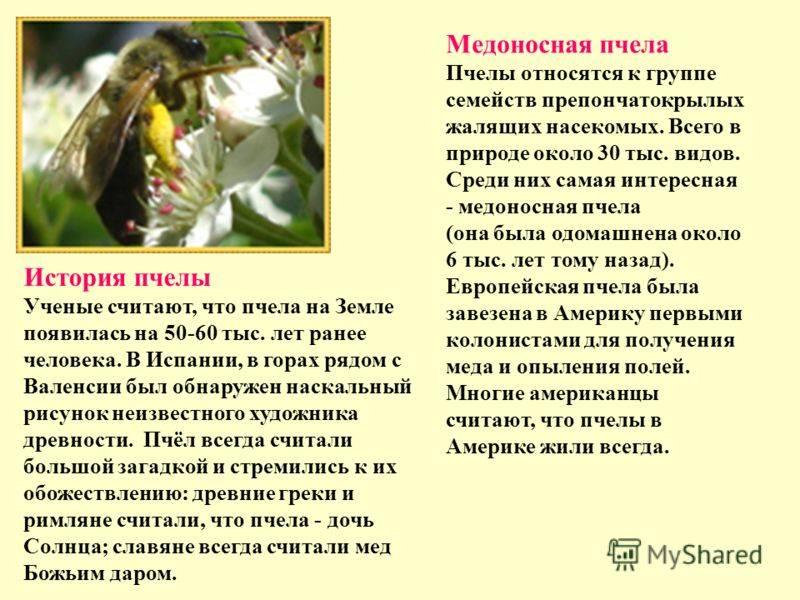 Короткая справка о медоносных пчёлах | зооляндия
