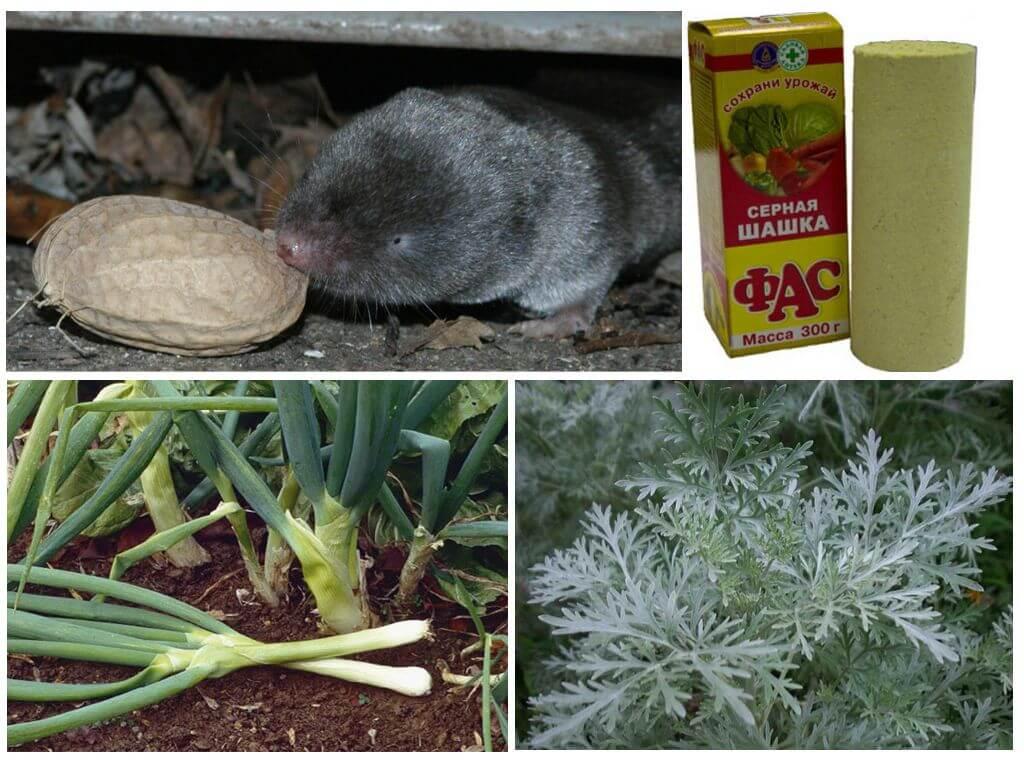 Землеройка: как бороться на садовом участке, фото и описание