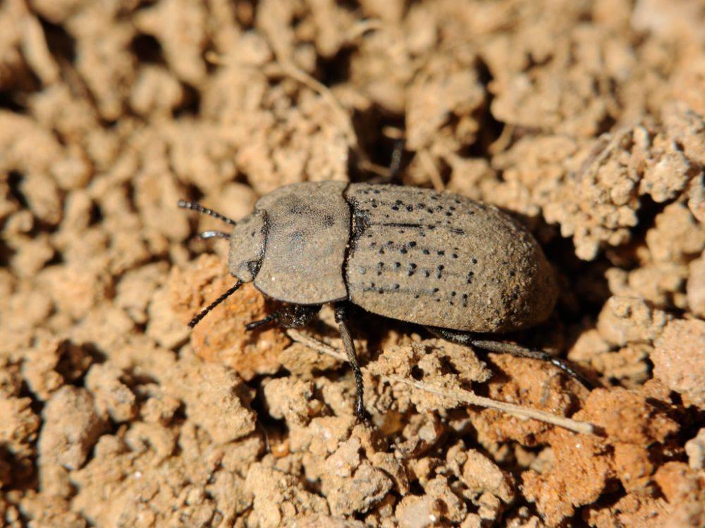 Многоядные вредители: описание представителей отрядов прямокрылых, жесткокрылых и чешуекрылых насекомых, меры защиты растений