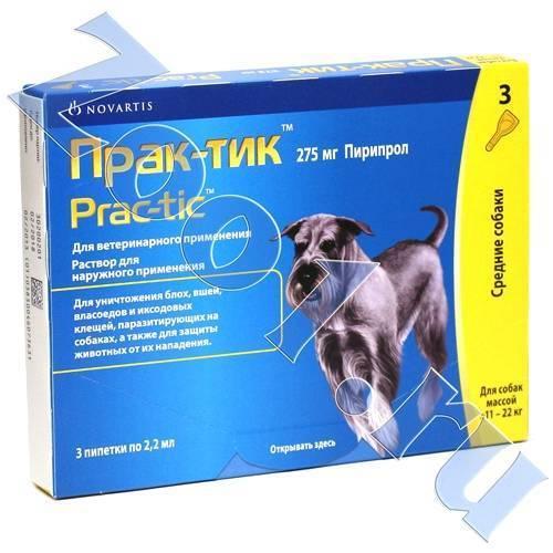 Практик капли для собак: инструкция по применению и отзывы о каплях для блох и клещей