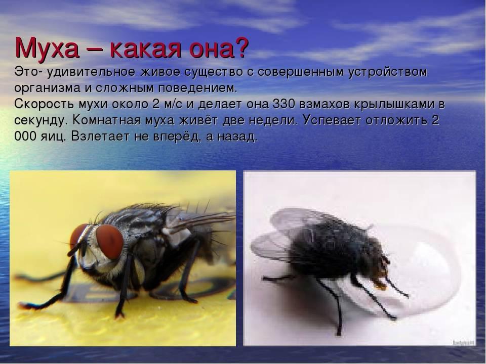 Как высоко летают комары и мухи. интересный вопрос — до какого этажа долетают комары? до какого этажа летают мухи