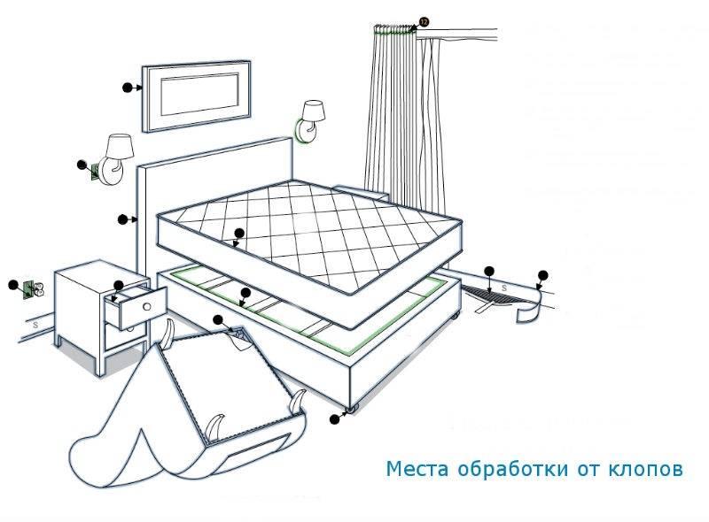 Размножение клопов постельных в квартире. неуязвимые яйца