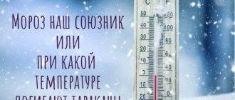 При какой температуре погибают тараканы, боятся ли холода, замерзают на морозе