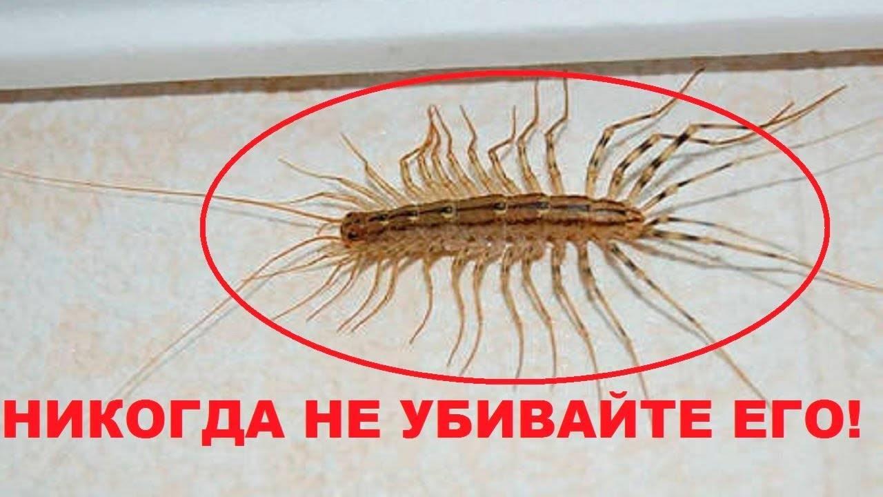 Венерина мухоловка — растение-хищник на подоконнике. уход в домашних условиях. фото — ботаничка.ru