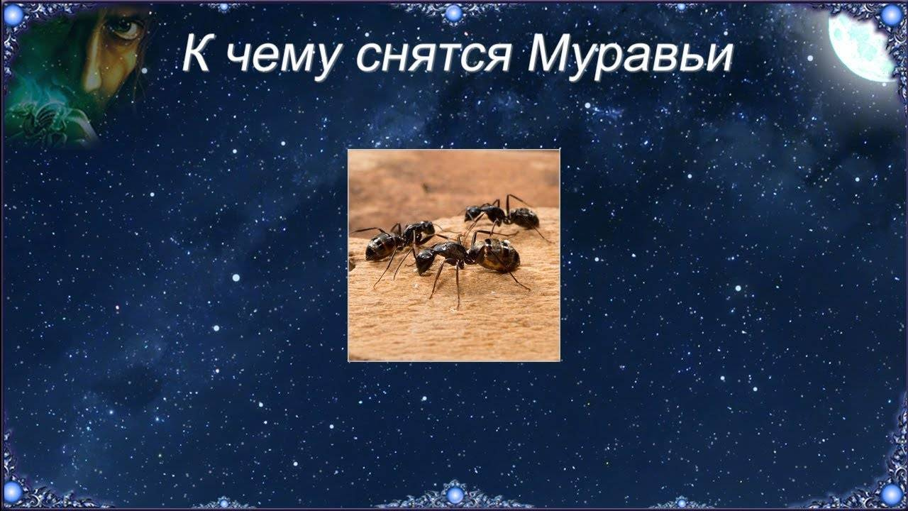 К чему снятся муравьи. сонники про муравьев во сне женщины
