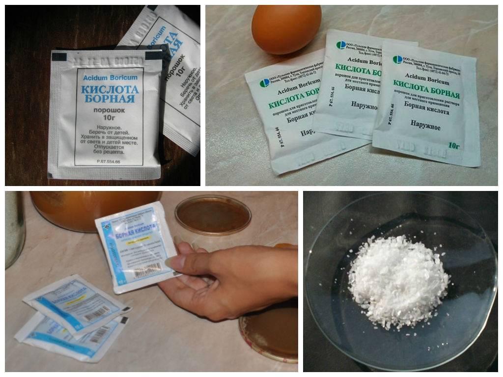 Борная кислота от тараканов: рецепты, как приготовить в домашних условиях