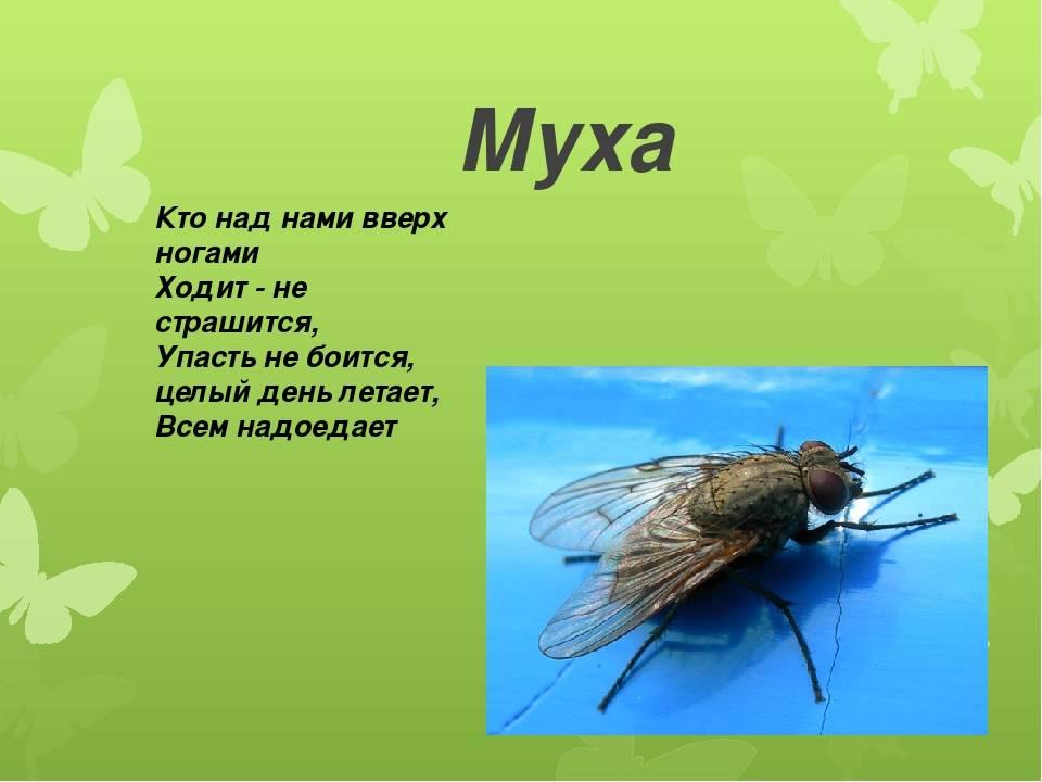 Особенности мух: строение тела, польза и вред