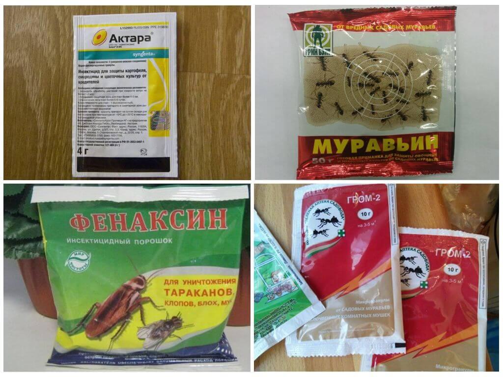 Лучшие способы борьбы с садовыми муравьями / асиенда.ру