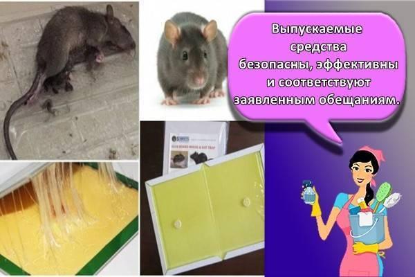 Клей от мышей и крыс. клей от мышей: отзывы, цены, описание