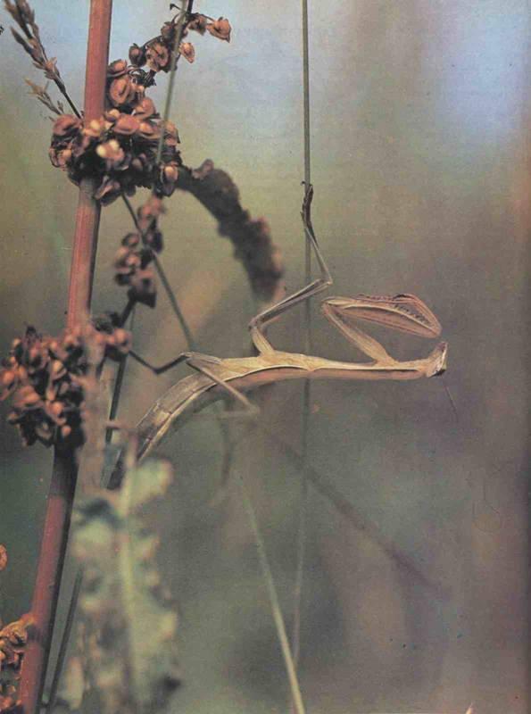 Эти удивительные муравьи — бороться или уживаться? описание, особенности жизни, как отпугнуть. фото — ботаничка.ru