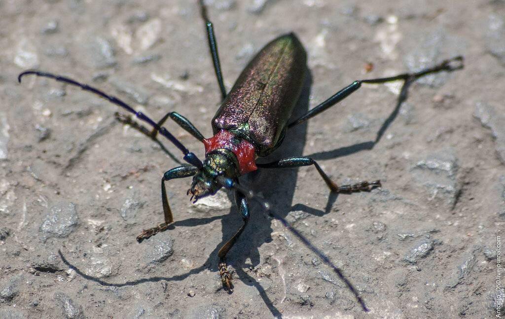 Какие насекомые красной книги россии нуждаются в охране