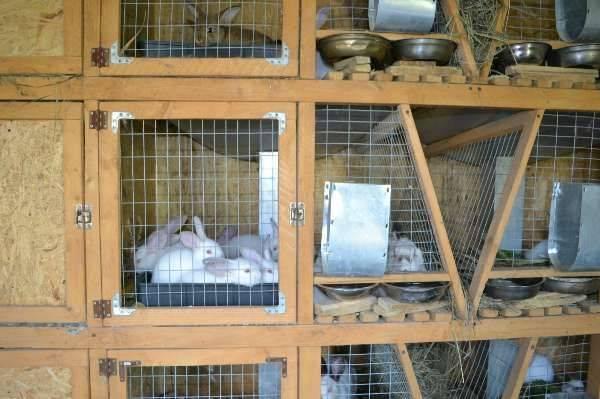 Защищаем кроликов от комаров. советы с фото и видео