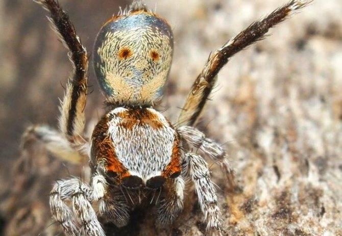 Самые опасные пауки в мире (фото): топ-6