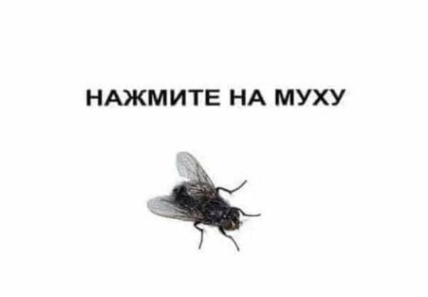 Как быстро избавиться от мух в доме народными средствами