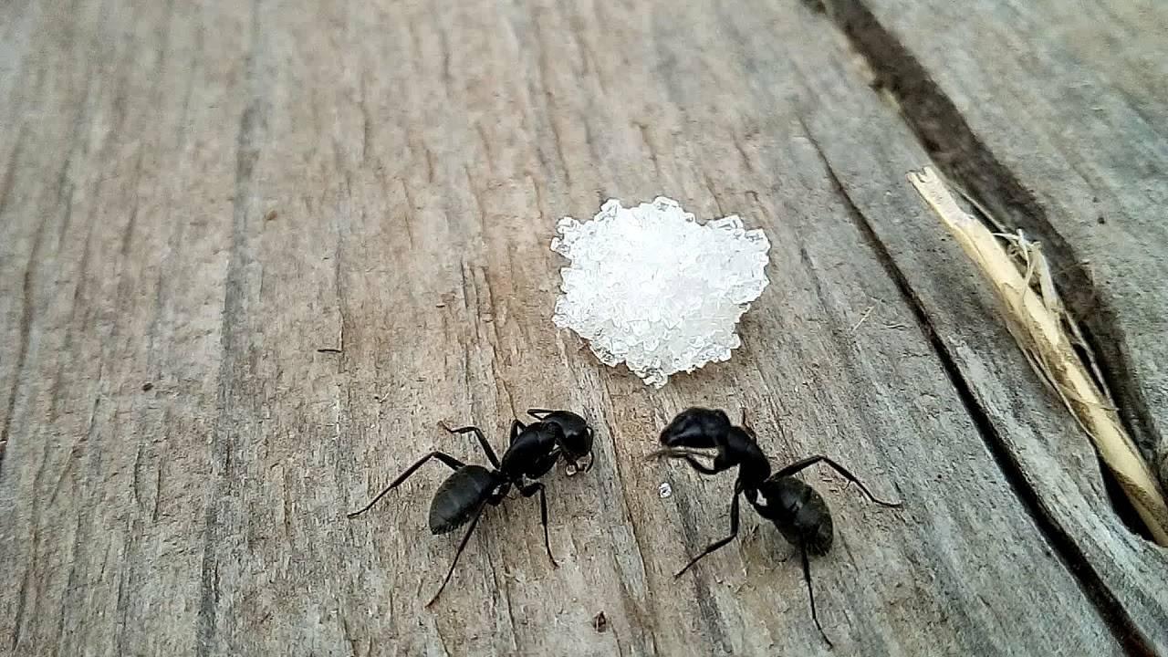 Кто ест муравьев. враги муравьев или кто их ест | дачная жизнь