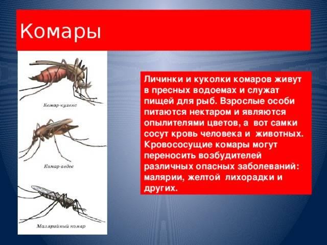 Что едят комары кроме крови, в частности самец комара?