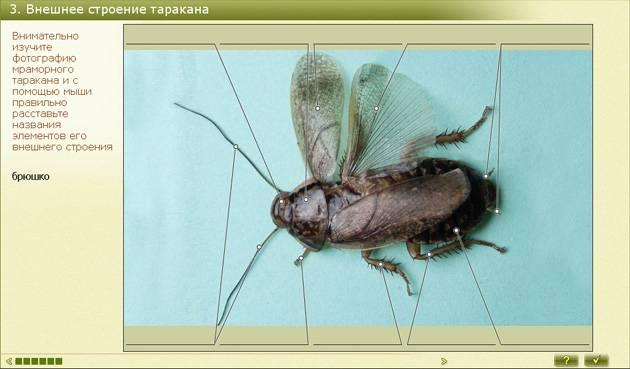 Какие бывают виды тараканов в квартире и не только