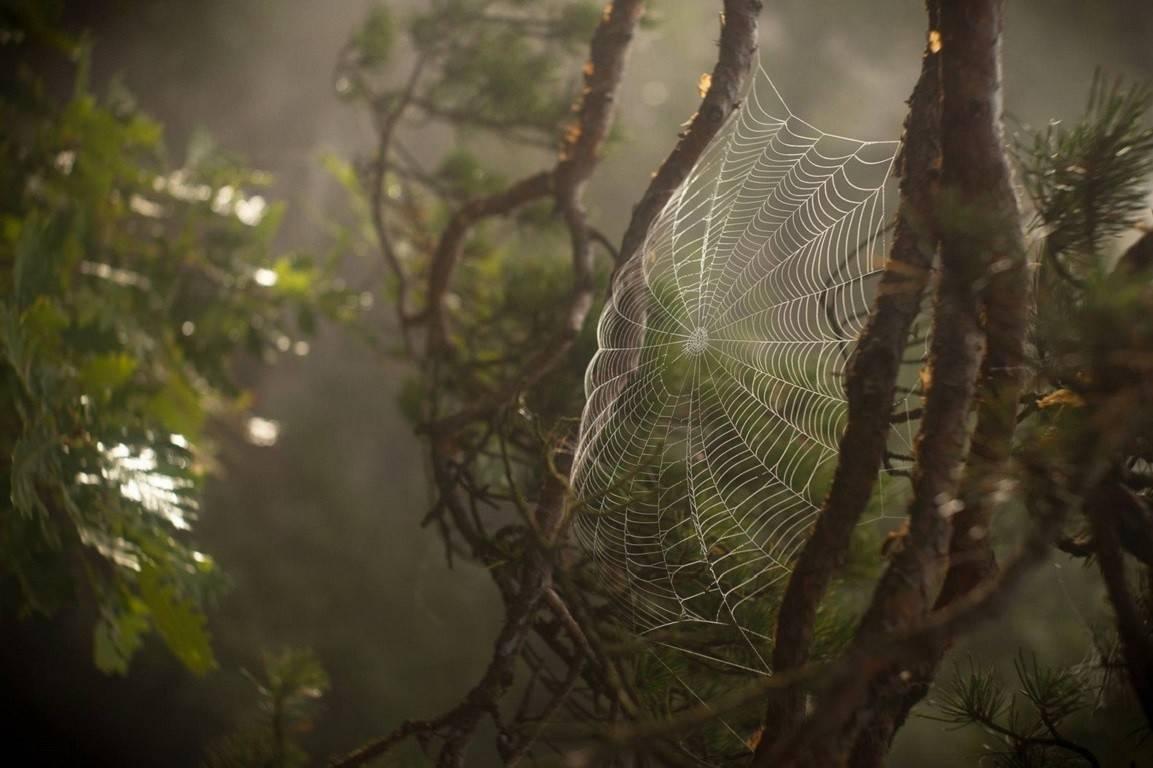 Защита сливы от вредителей и болезней (фото и описание). деревья в паутине: как помочь садовым растениям на сливе весной появляются ниточки паутины