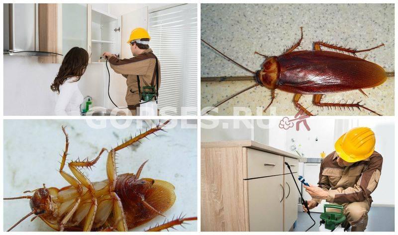 Чем эффективно травить тараканов в квартире самостоятельно: препараты и народные средства