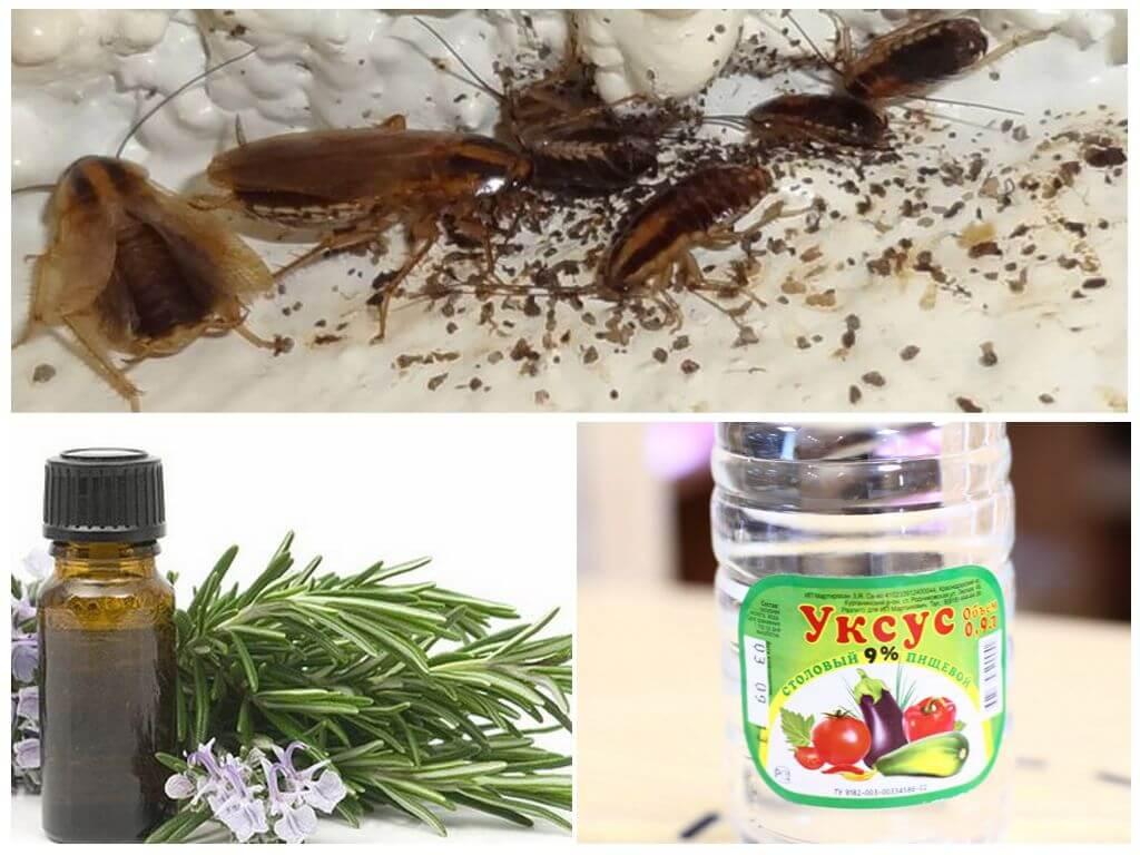 Использование эфирных масел в борьбе с тараканами. какие масла лучше всего отпугивают насекомых? способы применения