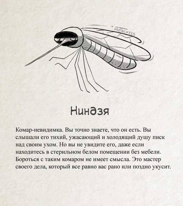 Комар: описание, питание, повадки, почему кусаются, размножение, виды, фото и видео