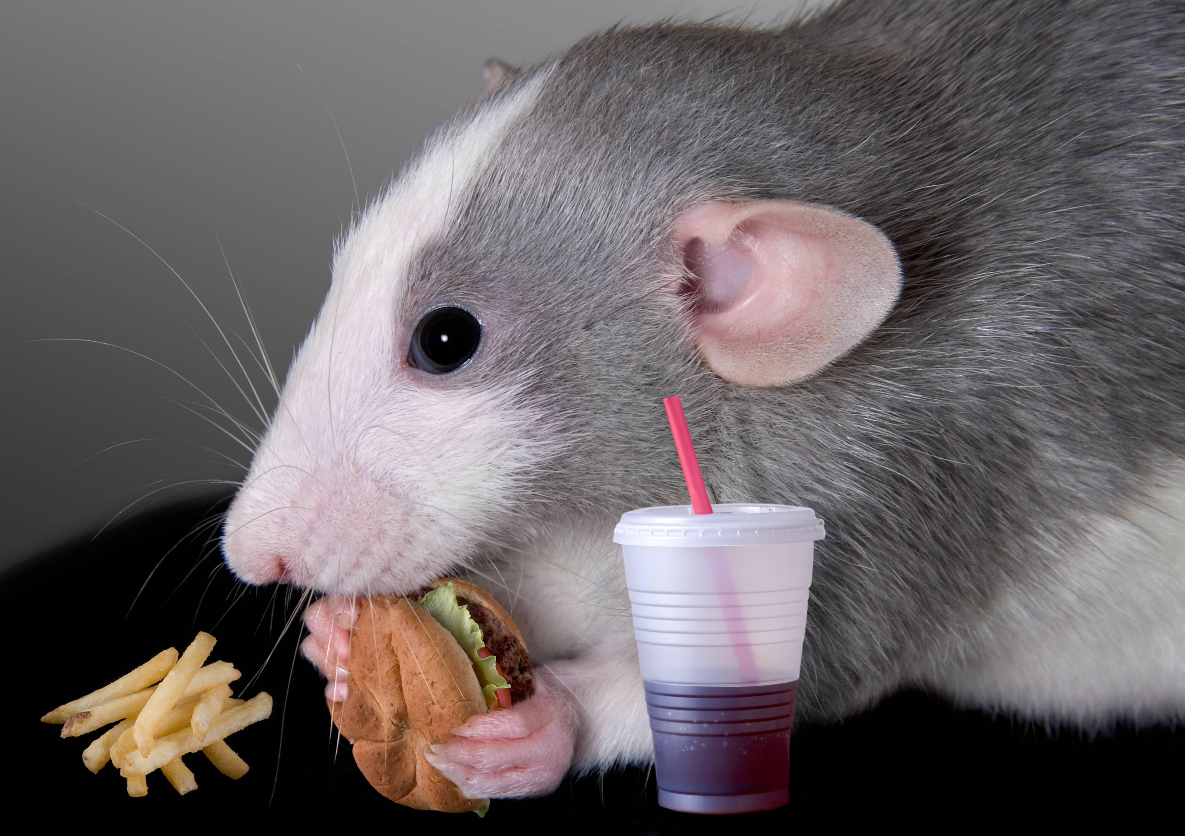 Летучая мышь - виды, где обитают, чем питаются, сколько живут, фото