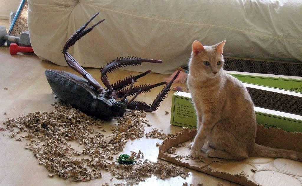 Какое животное в доме ест тараканов?