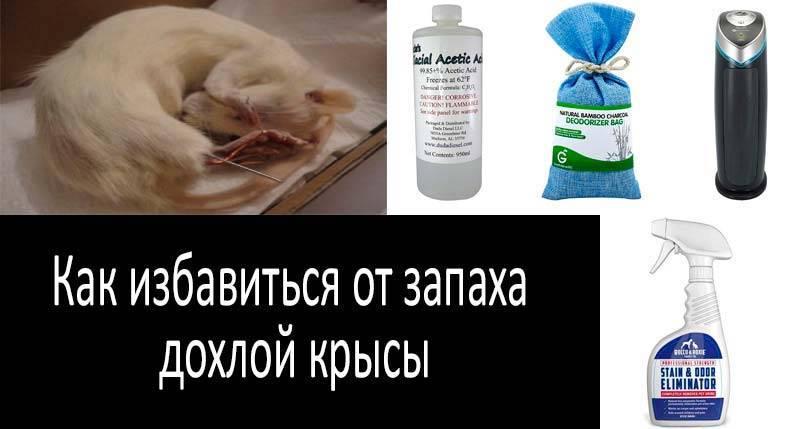 Как избавиться от запаха мышей в помещении, если мышь умерла?
