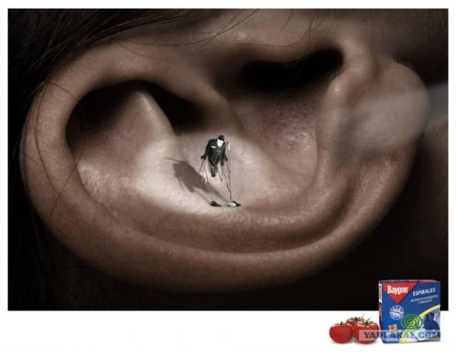 Что делать если в ухо попало насекомое — как вытащить?