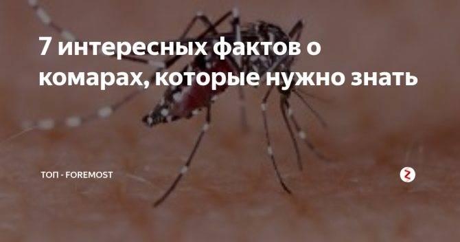 Интересные факты о комарах, или за что уважать кровососа. технические характеристики комара