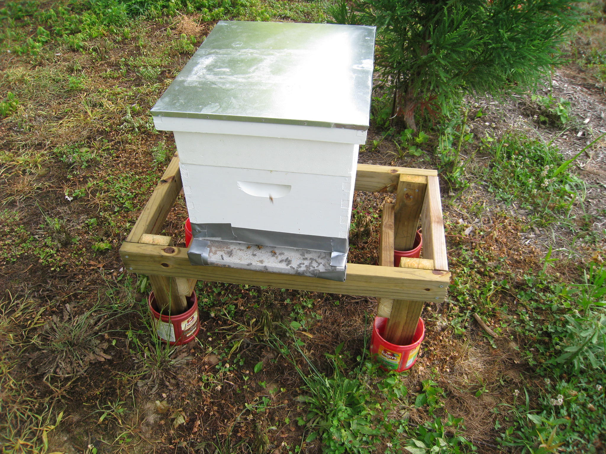 Что делать, если муравьи появились в улье на пасеке что делать, если муравьи появились в улье на пасеке