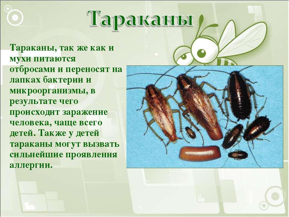 Тараканы - как готовить мадагаскарских тараканов