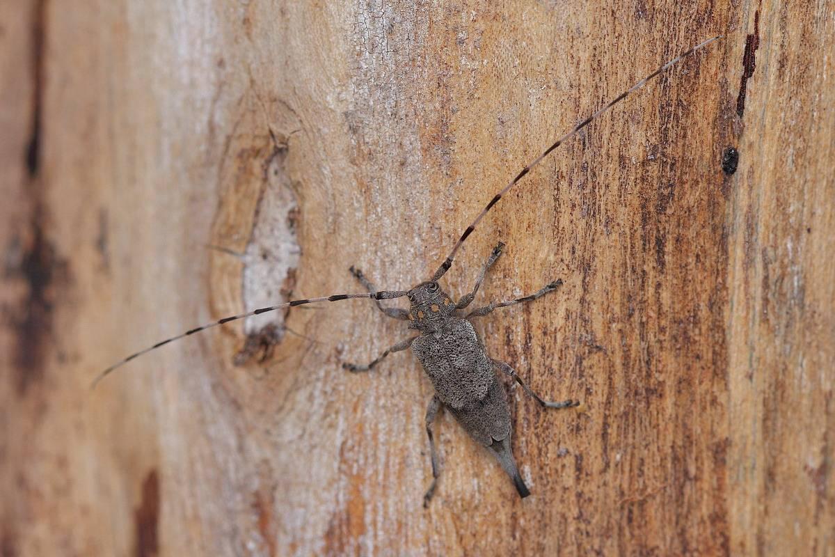Результаты учетов численности вредителей и видовой состав вредных насекомых