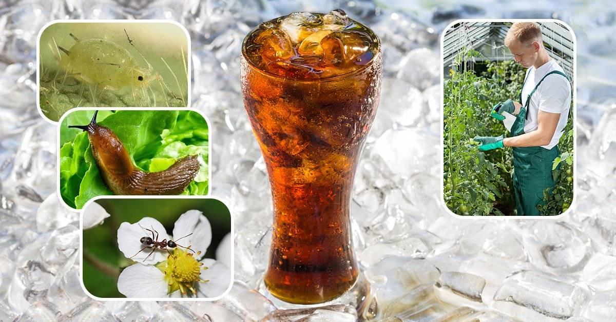 Coca-cola от тли: помогает ли она против тли? правила борьбы с вредителем. обзор отзывов