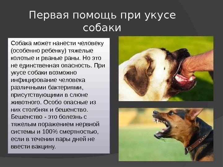 Почему бешенство так опасно для человека   русская семерка