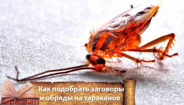 Заговор от тараканов в квартире: как читать текст правильно, чтобы насекомые ушли навсегда