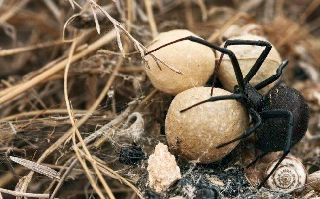 Кто ест пауков: естественные враги паукообразных