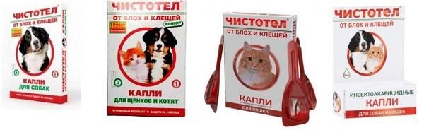 Капли от клещей для кошек: лекарства и препараты против паразитов, правила нанесения
