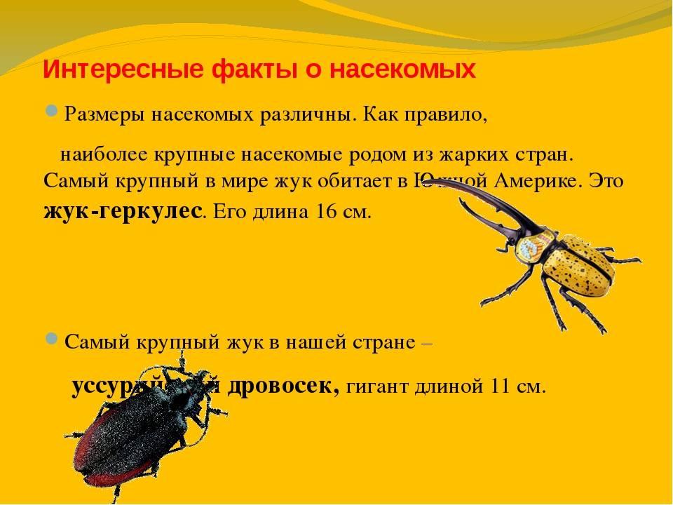 """Как действует """"дихлофос"""" на тараканов"""