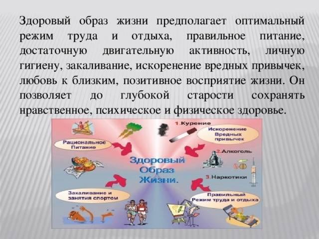 Муравей дерновый: образ жизни и социальное поведение распространенного вида