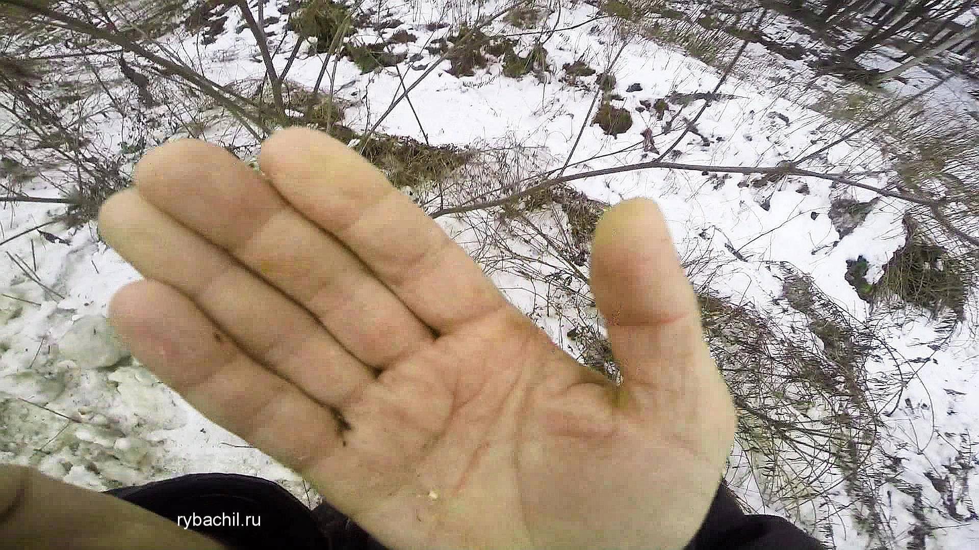 Личинки моли - фото и методы борьбы