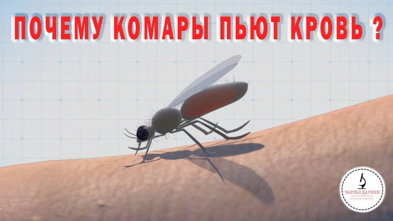 Зачем комары пьют кровь и для чего она им нужна? • всезнаешь.ру