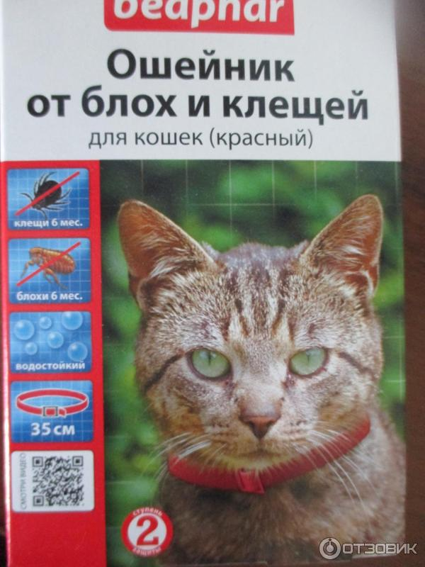 Ошейник от блох и клещей для кошек и котов   отзывы, цена, как действует