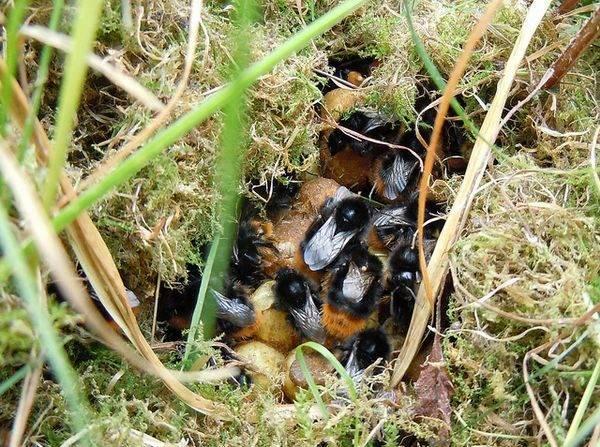 Выводим ос, шмелей и шершней из под крыши дома - советы по избавлению от опасных насекомых