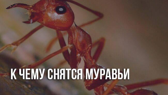 Сонник муравьи бегают по телу. к чему снится муравьи бегают по телу видеть во сне - сонник дома солнца