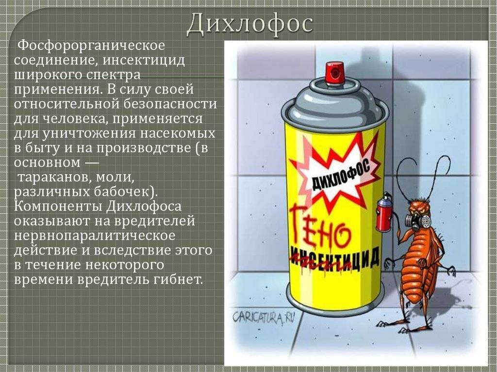 Дихлофос от тараканов: правила обработки квартиры, отзывы, инструкция по применению