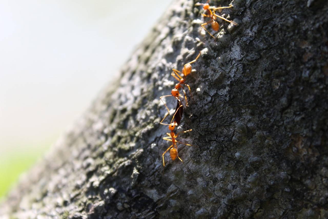 Мир удивительных насекомых