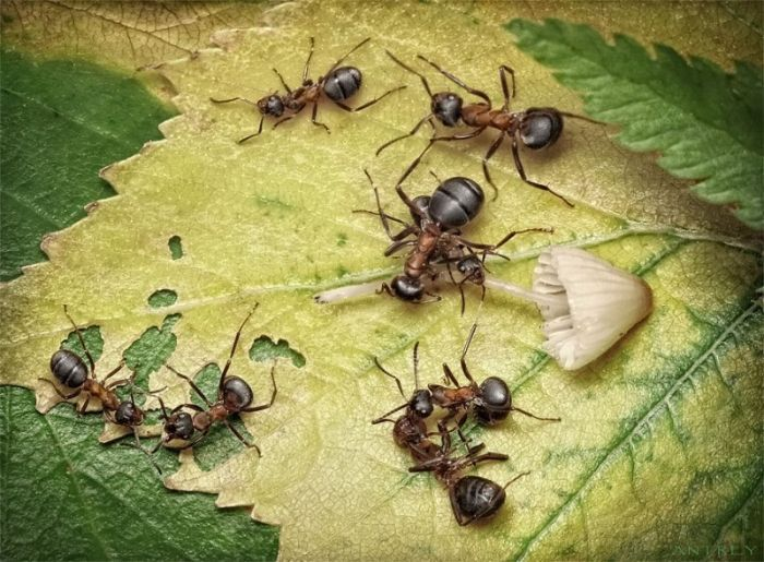 Самые интересные факты о муравьях для детей