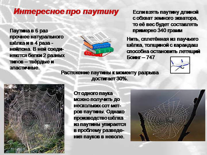 Как и почему паук плетет свою паутину. загадки паутины как у пауков появляется паутина