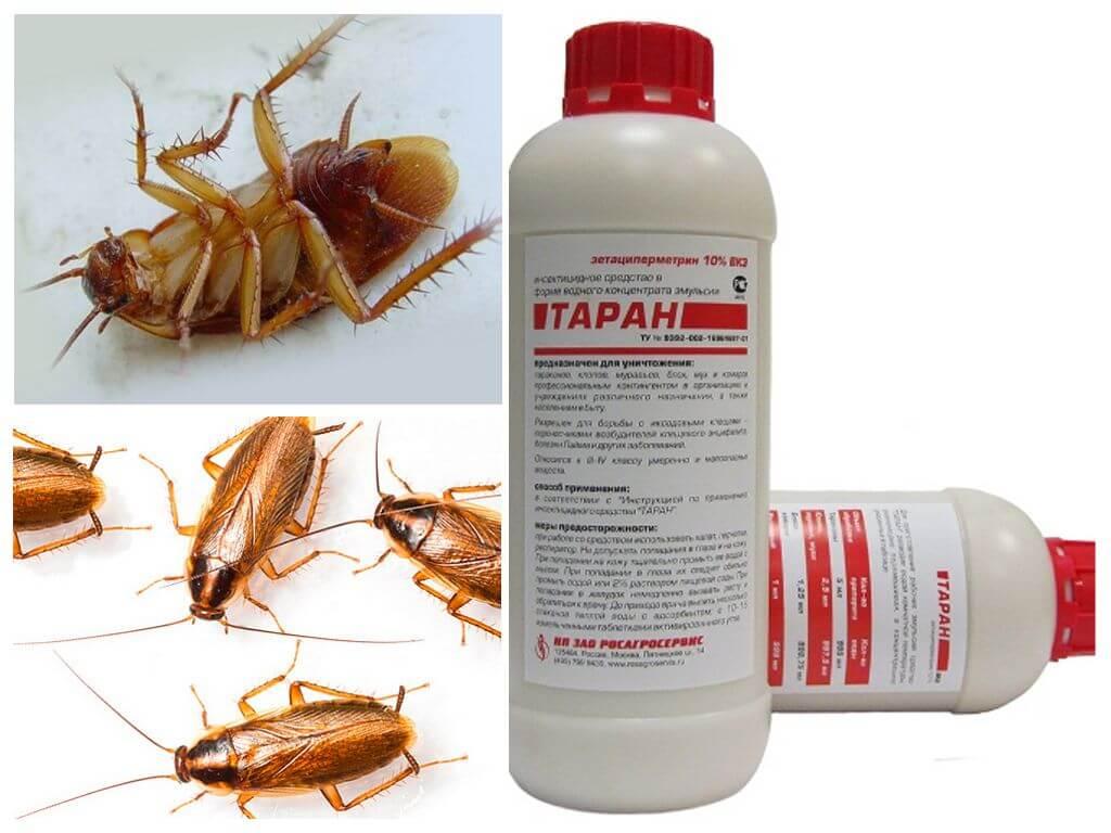 Таран от тараканов - инструкция по применению в домашних условиях